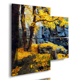 autumn leaves in yellow pictures