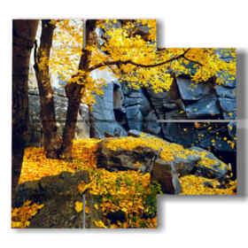 autunno quadri foglie in giallo