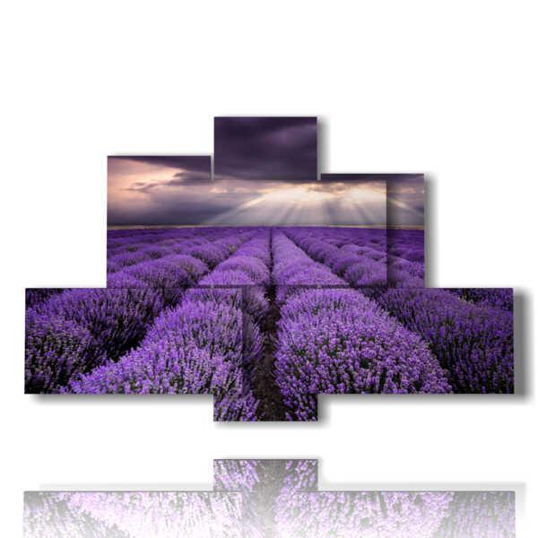 tableaux de fleurs de lavande dans le reflet du ciel