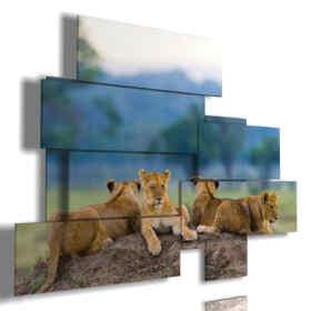 quadri di leoni cuccioli nella loro tana