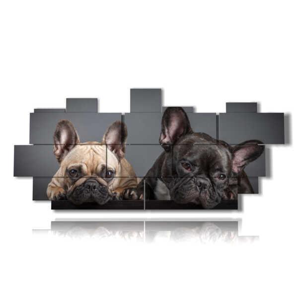 cuadros con perros curiosos