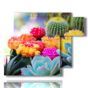 quadro di fiori con piante grasse colorate