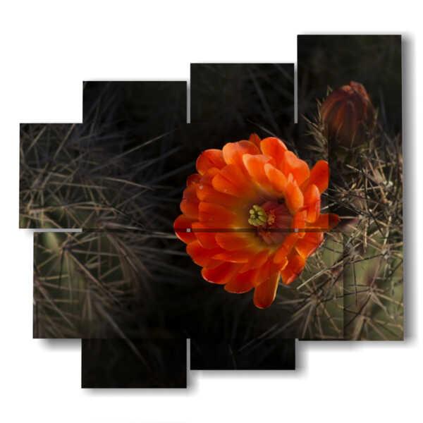 quadri moderni di fiori dolci ma spinosi