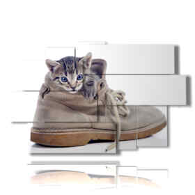 Cat Modern picture hidden in the shoe