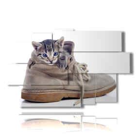 gatto quadro nascosto nella scarpa