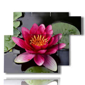modern painting Water lily 02