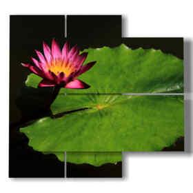 quadri con foto fiori foglia grande