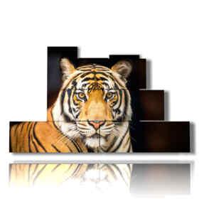 quadro tigre in primo piano