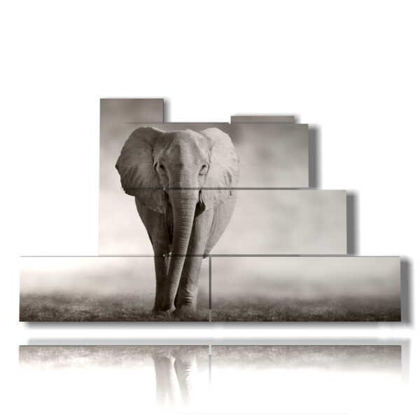 cuadro elefante gris