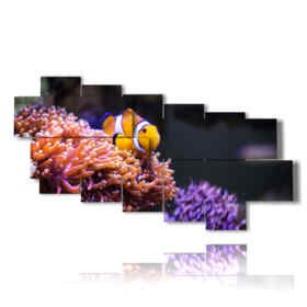 quadro Pesce Pagliaccio 01