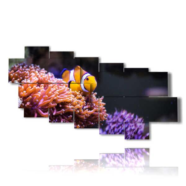cuadros con pez payaso