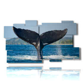 quadro con pesce coda di balena