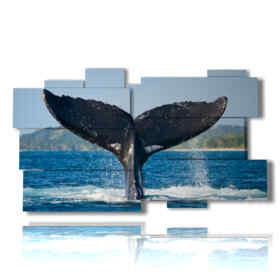 quadro Balena 01
