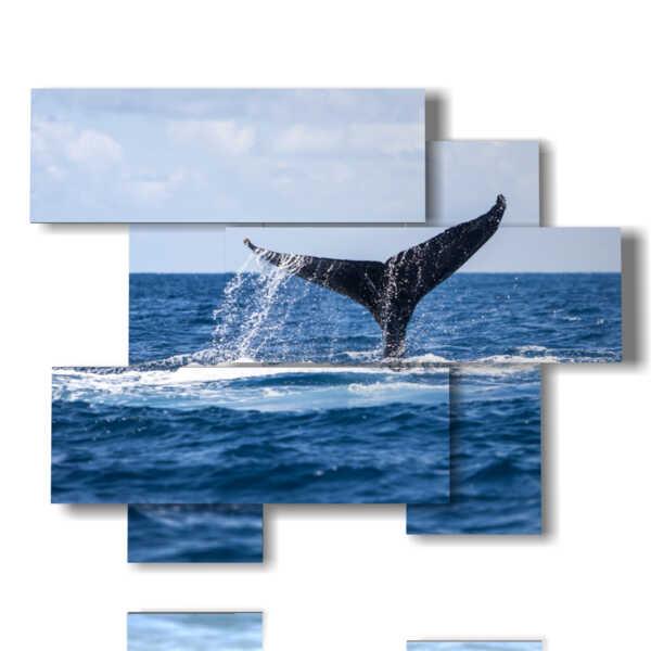 cuadros de peces de ballenas