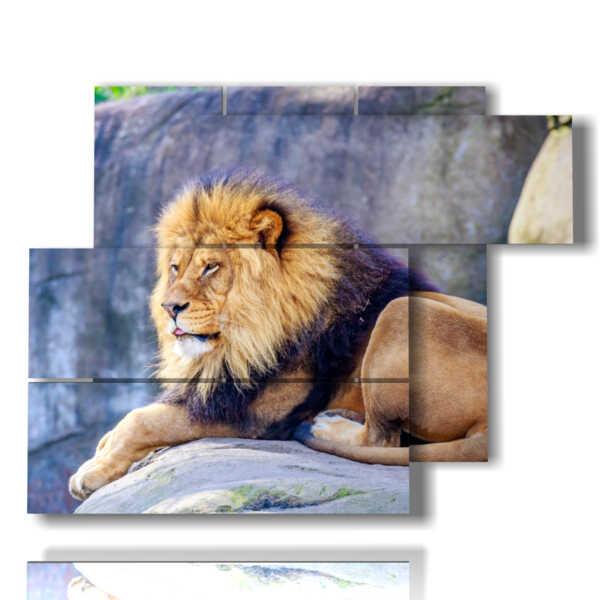 cuadro con el rey del león de la sabana