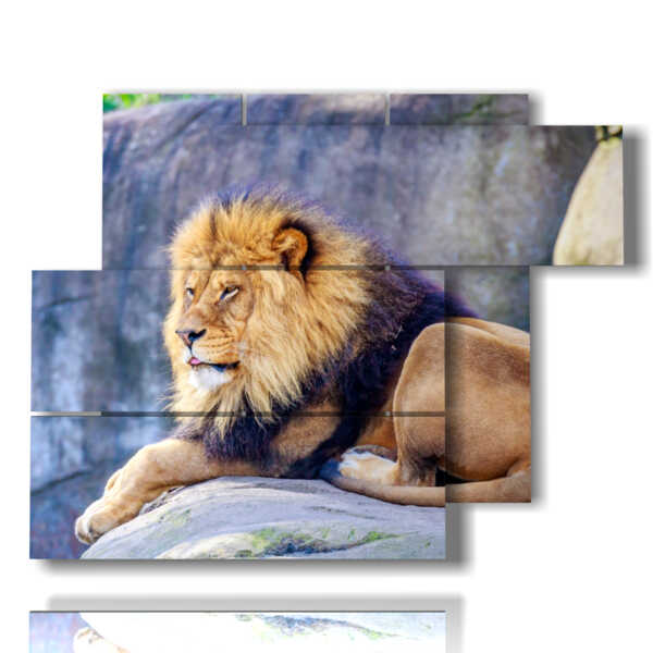 painting with the king of the savannah lion