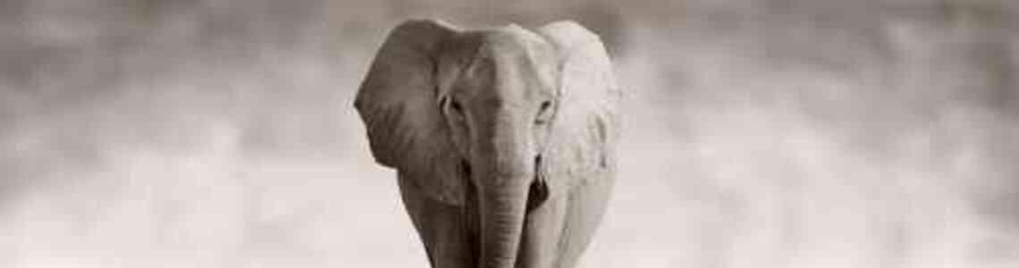cuadros modernos elefantes