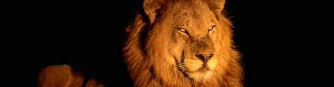 tableaux modernes lion