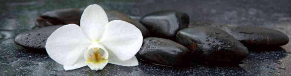 moderne bilder mit orchideen