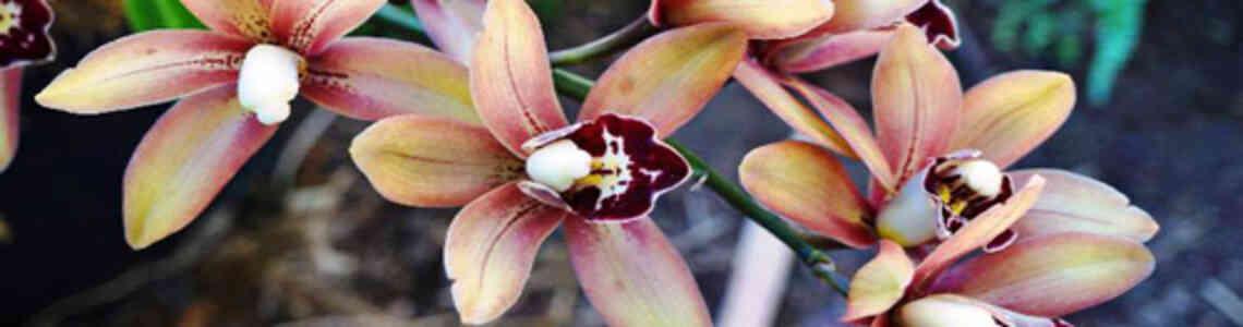 moderne bilder mit magnolien