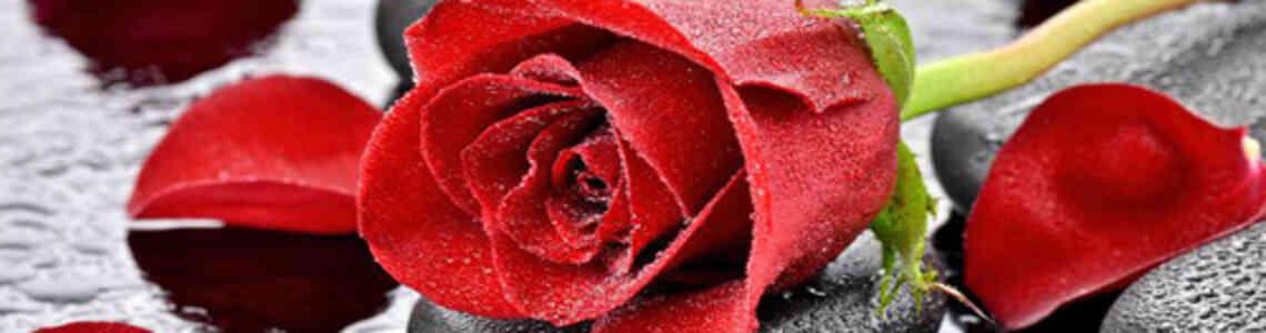 moderne bilder mit rosen