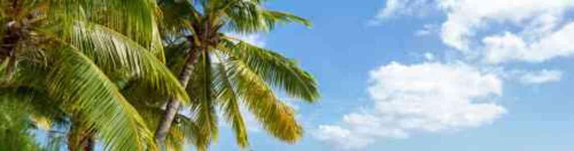 moderne bilder palmen