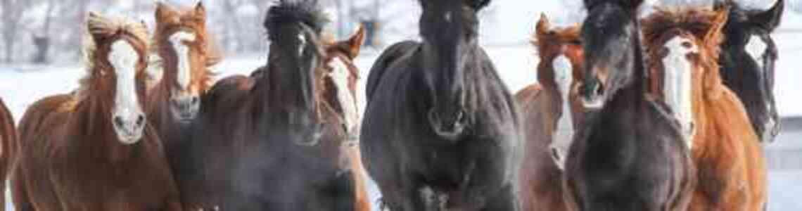 modern paintings horses