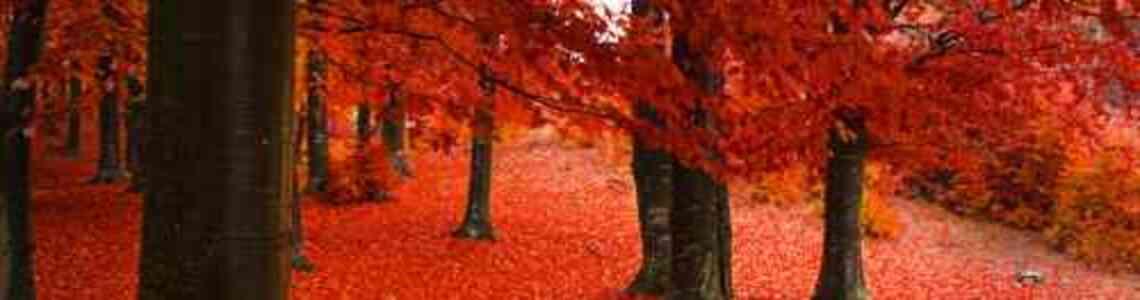 tableaux modernes automne
