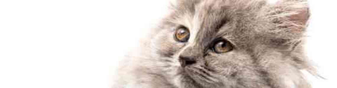 quadri con gatti