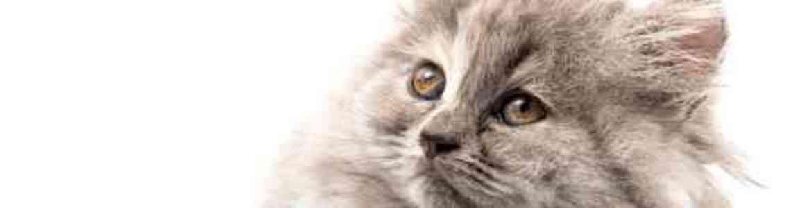 tableaux modernes avec des chats