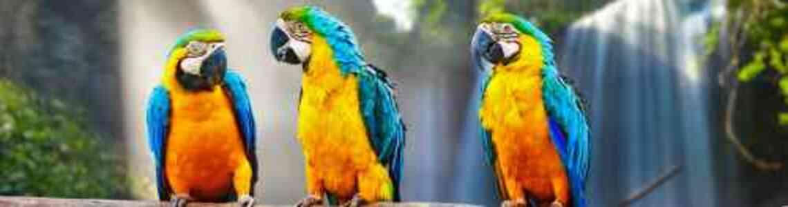 cuadros modernos con pájaros