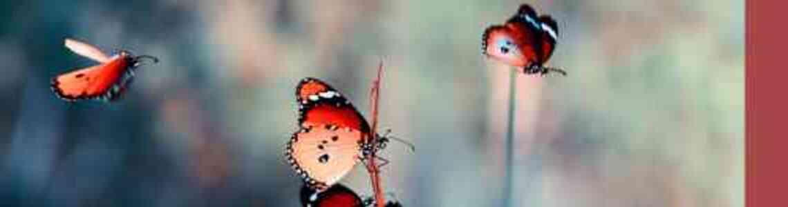 tableaux modernes avec des papillons