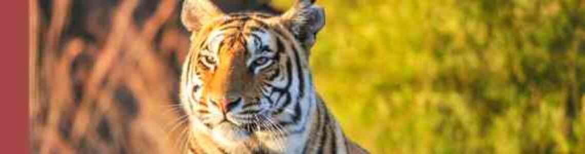tableaux modernes avec des tigres